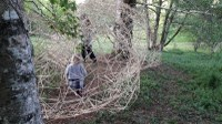 arboretum - article de Pauline Lisowski
